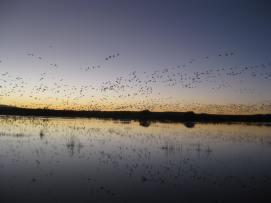bosque-birds